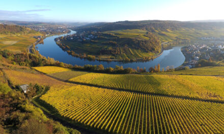 Luxembourg puts gold in its wine in the Moselle Valley